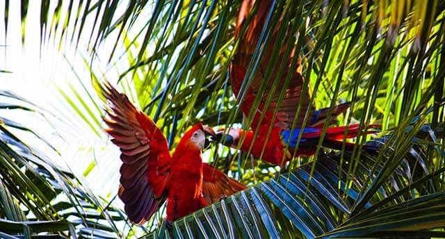 Picture of a parrot in Costa Rica